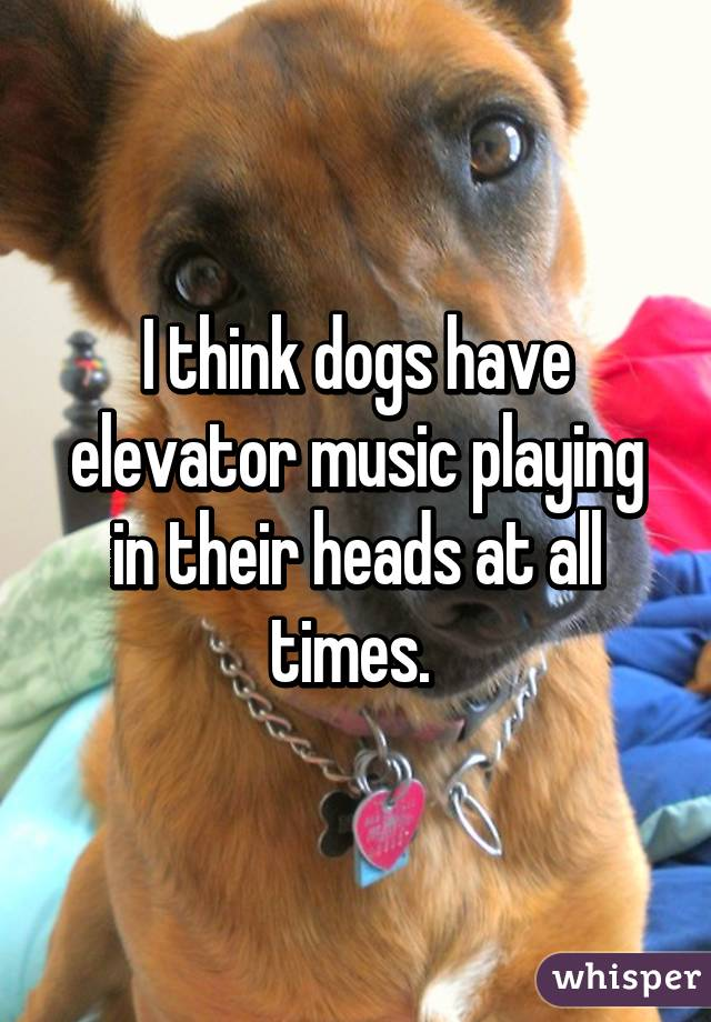 I think dogs have elevator music playing in their heads at all times.