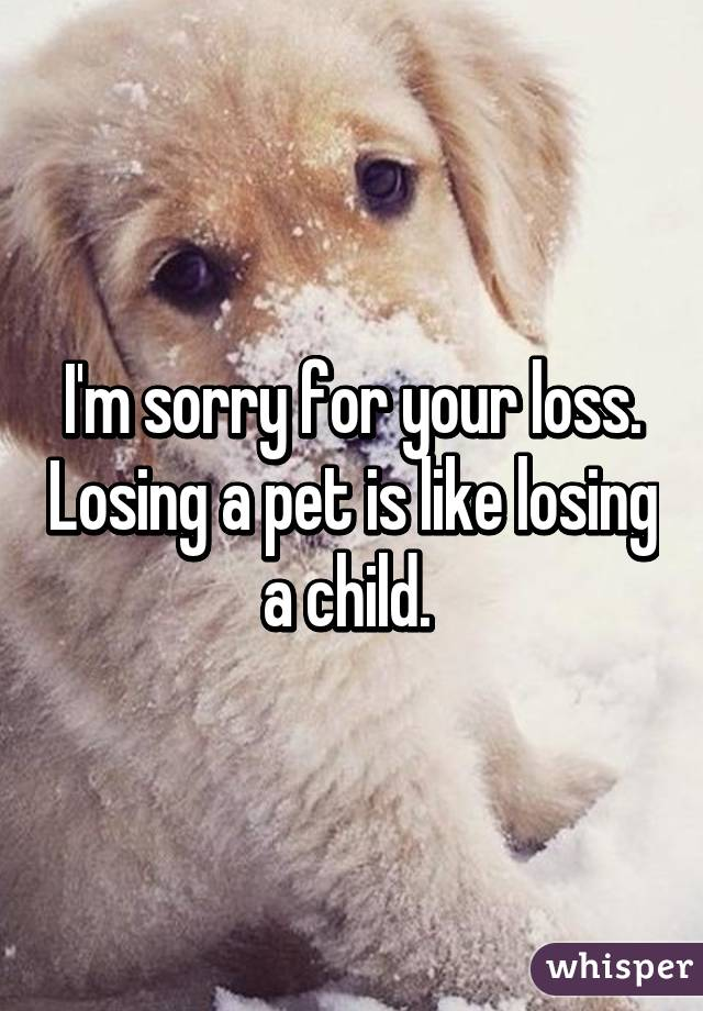 Im sorry for your loss losing a pet is like losing a child voltagebd Images