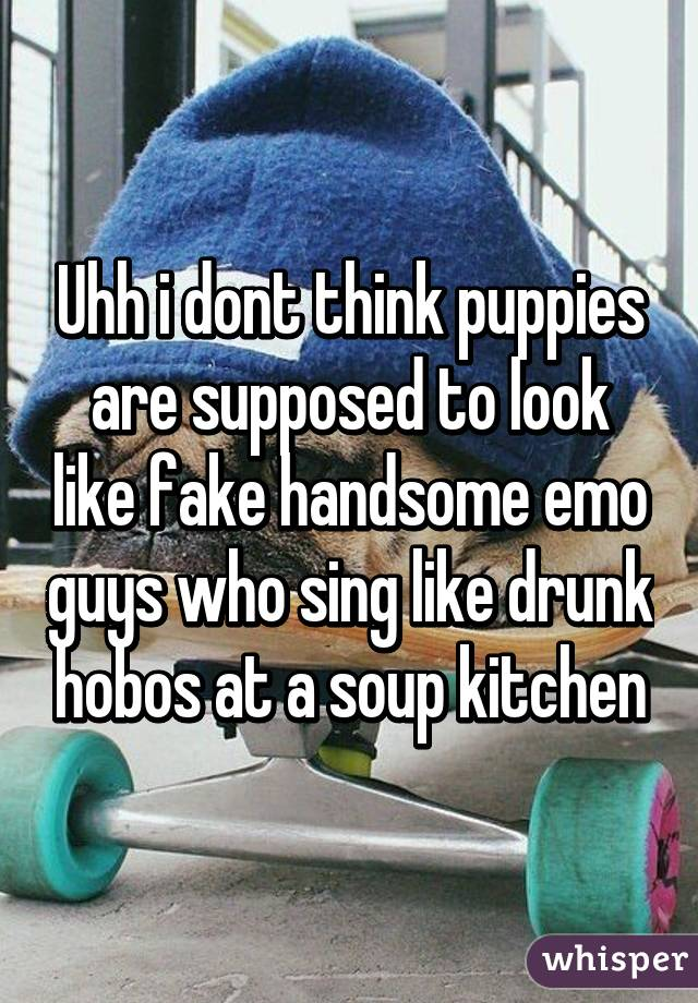 Uhh I Dont Think Puppies Are Supposed To Look Like Fake Handsome Emo Guys  Who Sing Like Drunk Hobos At A Soup Kitchen