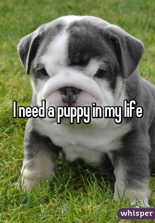 My Life as a Puppy