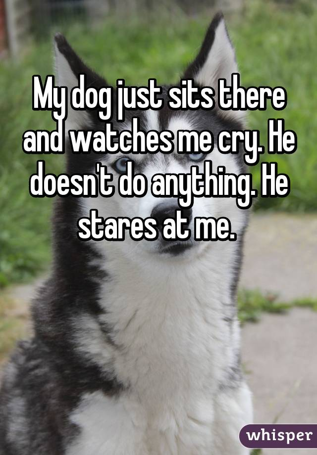 My dog just sits there and watches me cry. He doesn't do anything. He stares at me.
