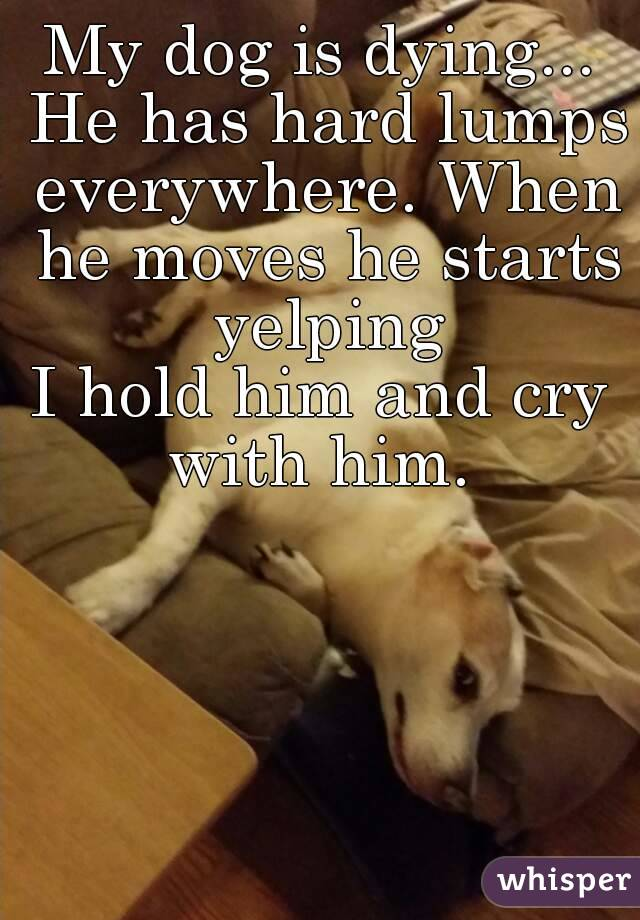 My dog is dying... He has hard lumps everywhere. When he moves he starts yelping I hold him and cry with him.