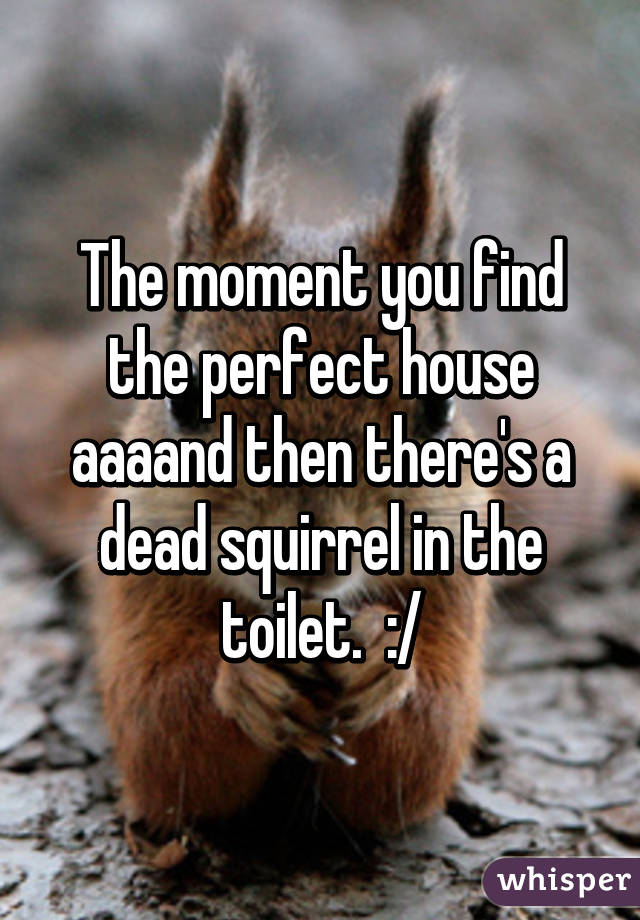 The moment you find the perfect house aaaand then there's a dead squirrel in the toilet.  :/