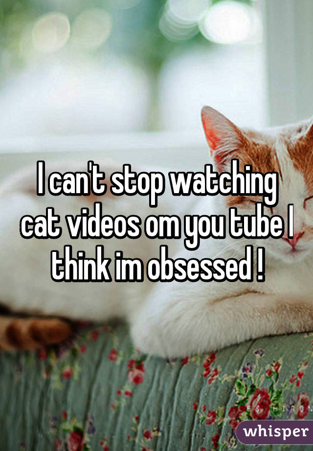 I can't stop watching cat videos om you tube I think im obsessed !