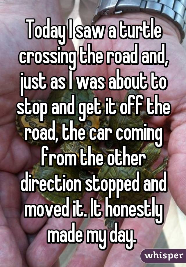 Today I saw a turtle crossing the road and, just as I was about to stop and get it off the road, the car coming from the other direction stopped and moved it. It honestly made my day.