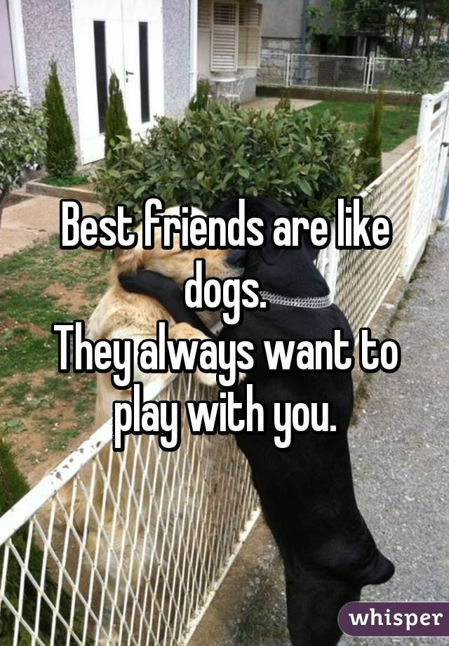 Best friends are like dogs. They always want to play with you.