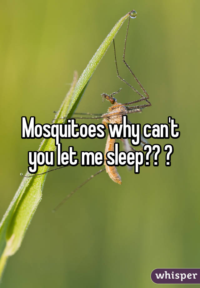 Mosquitoes why can't you let me sleep?? 😫