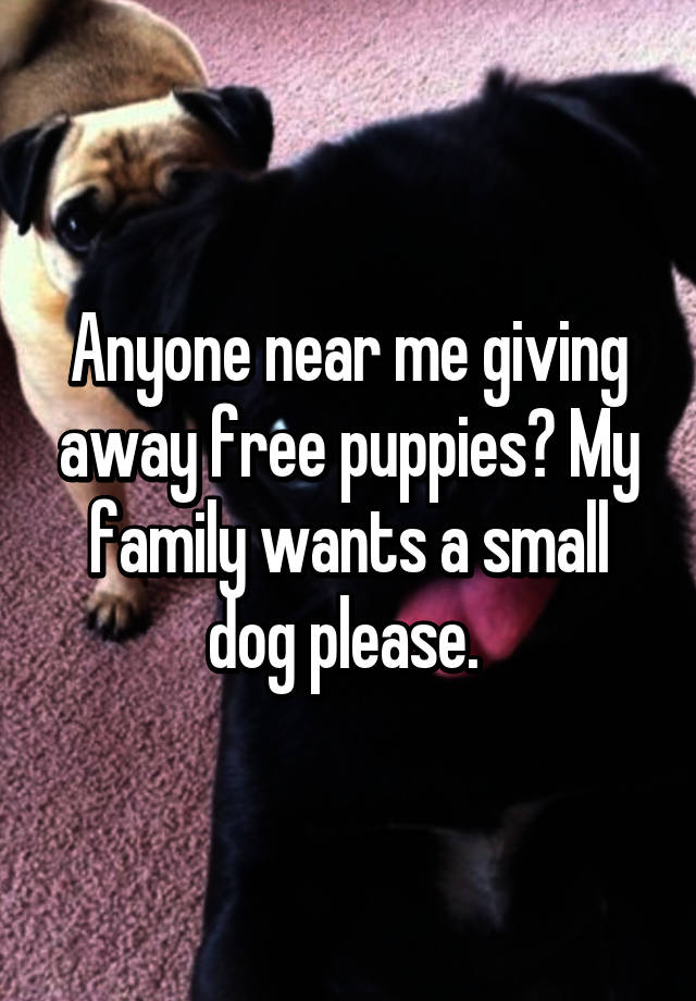 Anyone Near Me Giving Away Free Puppies My Family Wants A Small Dog