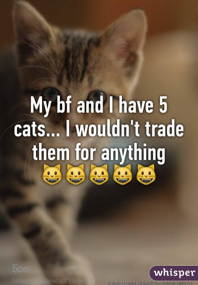 My bf and I have 5 cats... I wouldn't trade them for anything      😺😺😺😺😺