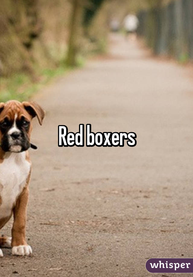Red boxers