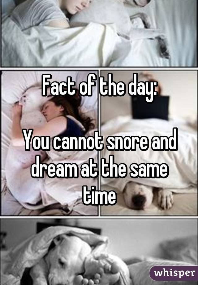 Fact of the day:  You cannot snore and dream at the same time