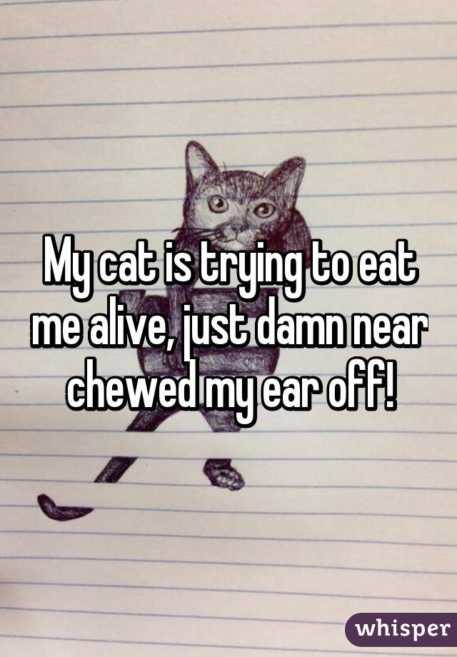 My cat is trying to eat me alive, just damn near chewed my ear off!