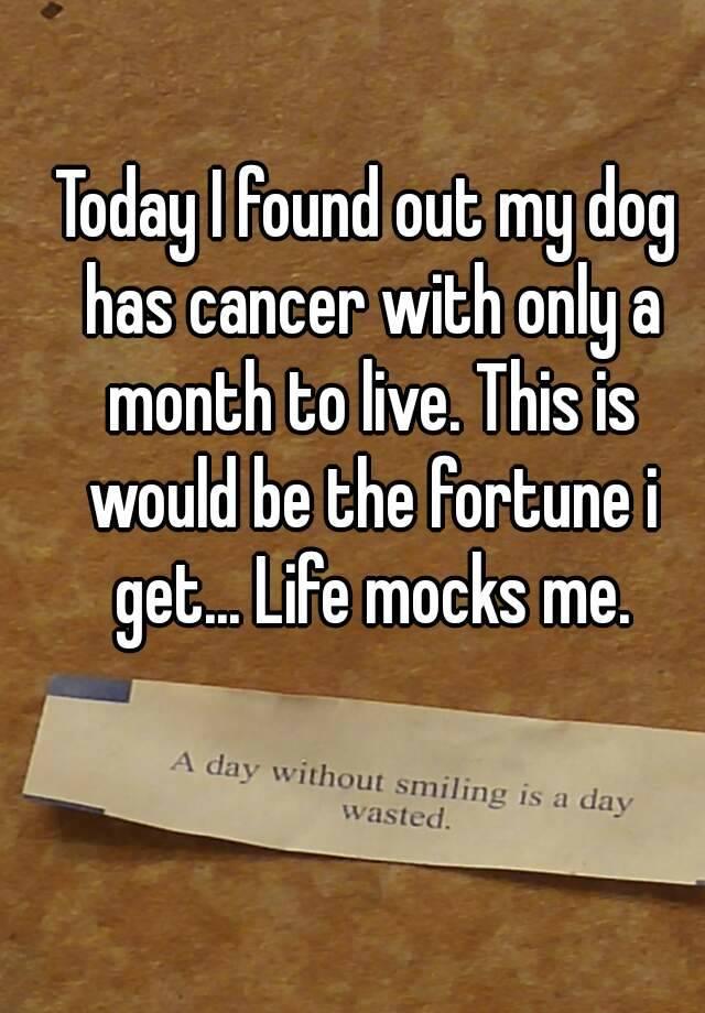 my dog has cancer