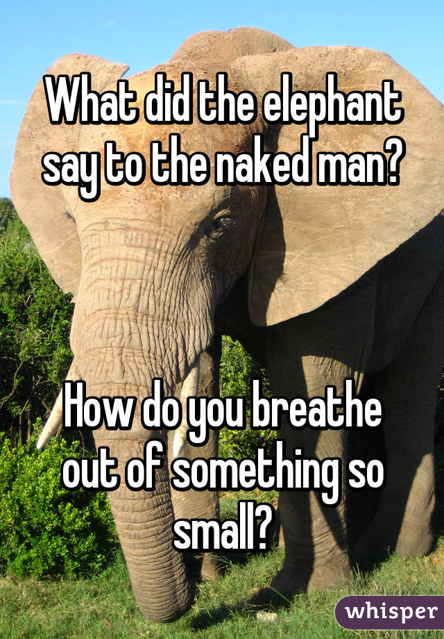 What Did The Elephant Say To The Naked Man