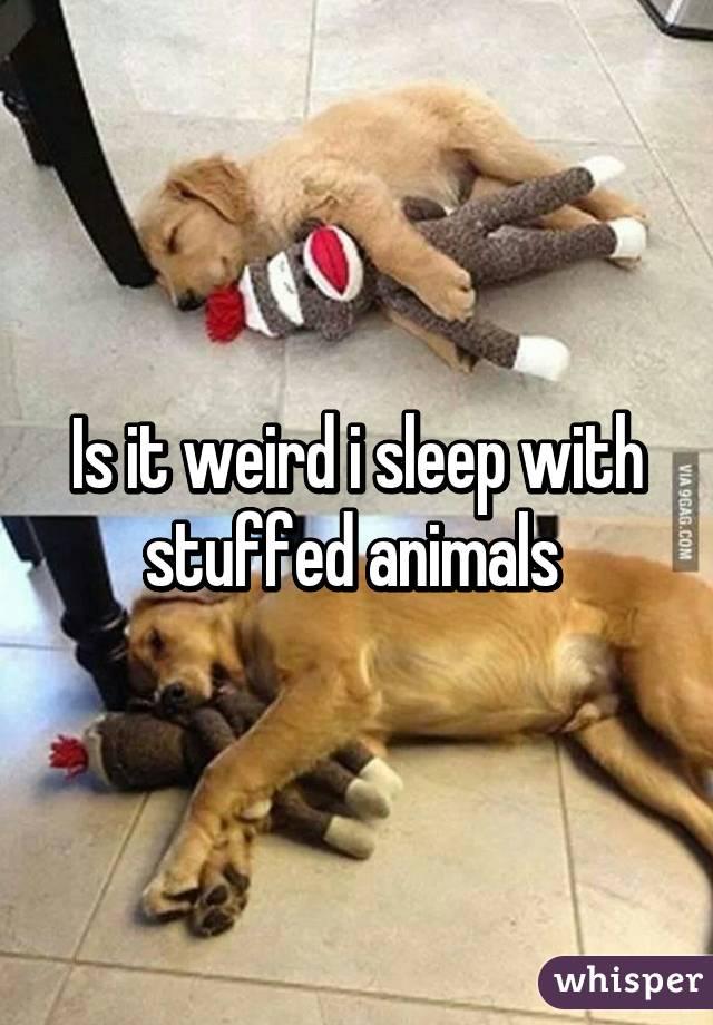 Is it weird i sleep with stuffed animals