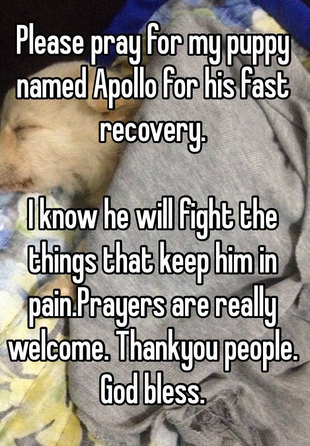 please pray for my puppy named apollo for his fast recovery i know he will fight the things that keep him in painprayers are really welcome