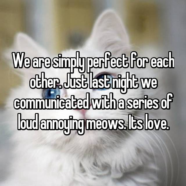 We are simply perfect for each other. Just last night we communicated with a series of loud annoying meows. Its love.