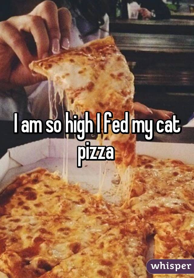 I am so high I fed my cat pizza
