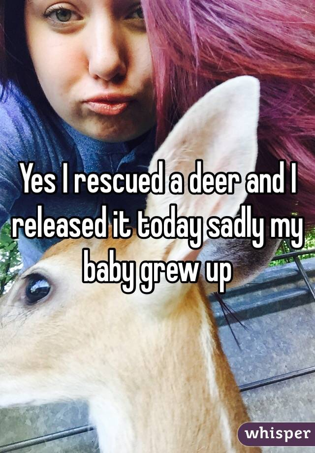 Yes I rescued a deer and I released it today sadly my baby grew up