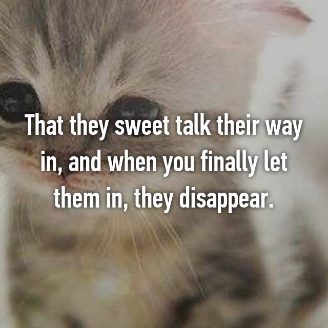 That they sweet talk their way in, and when you finally let them in, they disappear.