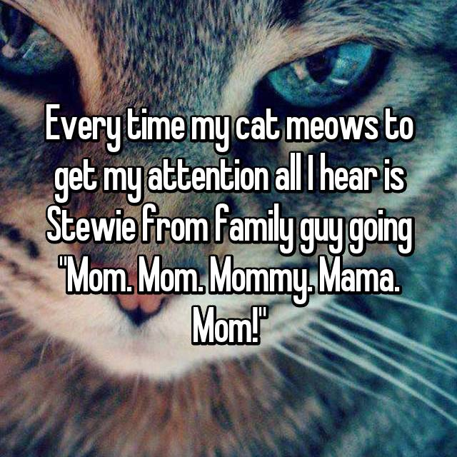 "Every time my cat meows to get my attention all I hear is Stewie from family guy going ""Mom. Mom. Mommy. Mama. Mom!"""