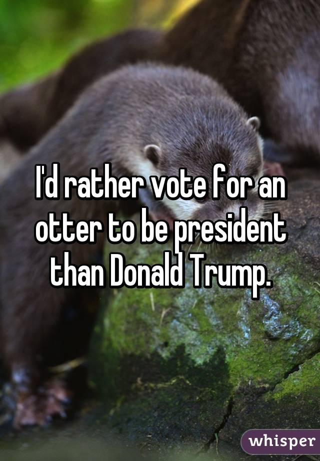 I'd rather vote for an otter to be president than Donald Trump.