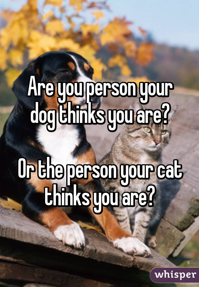 Are you person your dog thinks you are?  Or the person your cat thinks you are?