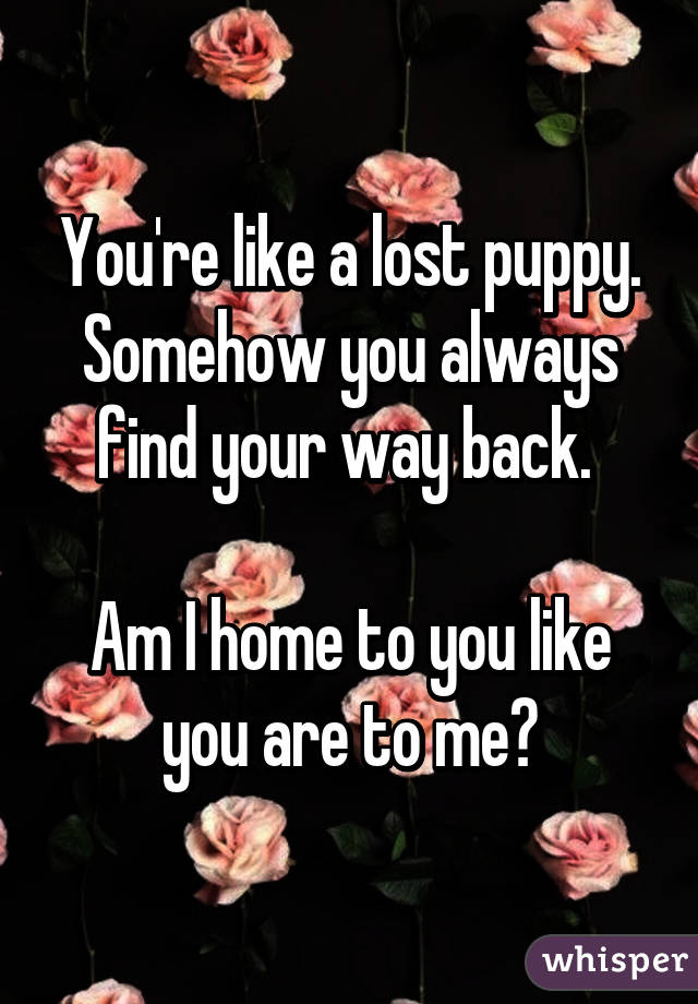 You're like a lost puppy. Somehow you always find your way back.   Am I home to you like you are to me?