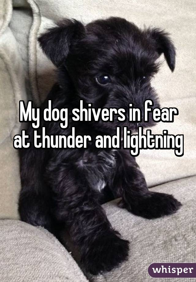 My dog shivers in fear at thunder and lightning