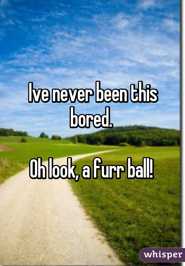 Ive never been this bored.   Oh look, a furr ball!