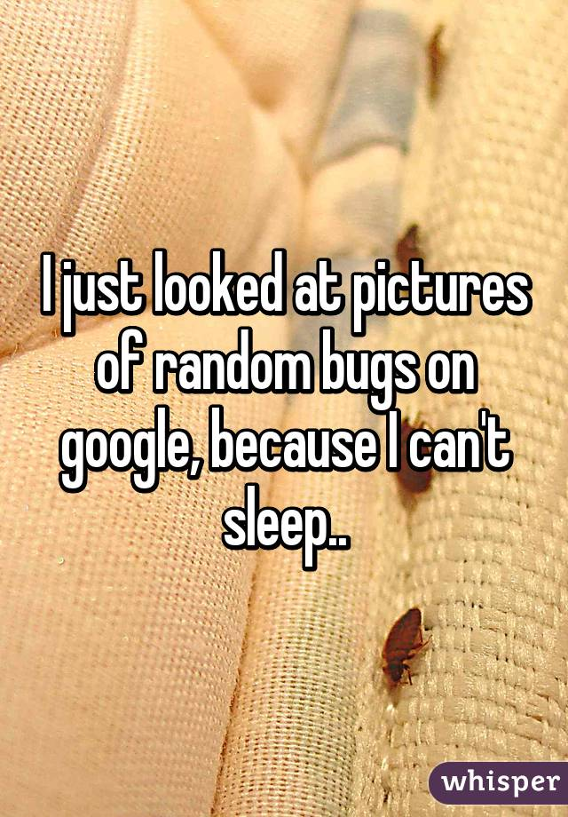 I just looked at pictures of random bugs on google, because I can't sleep..