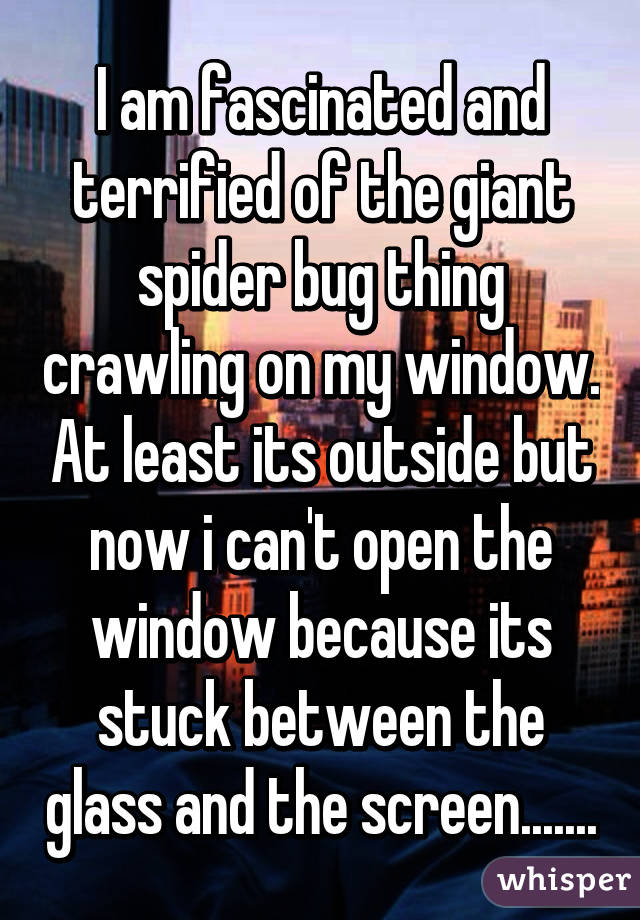 I am fascinated and terrified of the giant spider bug thing crawling on my window. At least its outside but now i can't open the window because its stuck between the glass and the screen.......