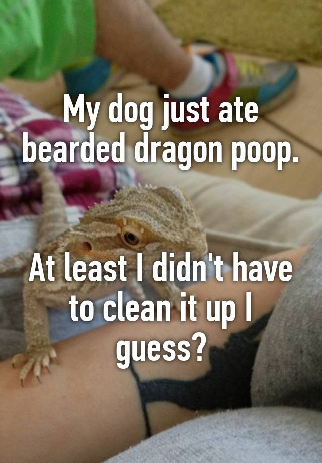 My Dog Just Ate Bearded Dragon Poop At Least I Didn T Have To