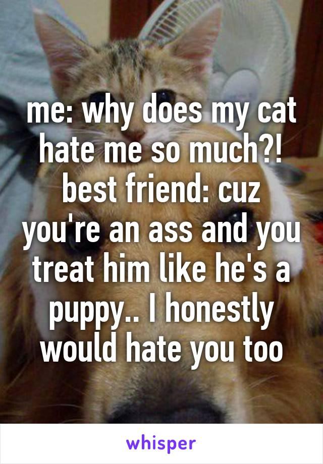 my cat hates my new puppy