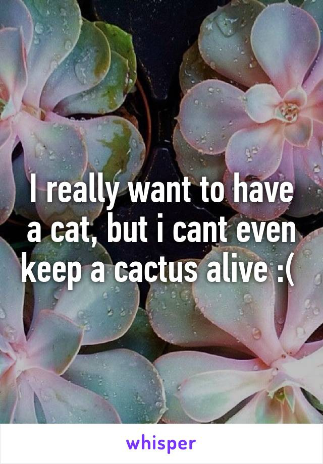 I really want to have a cat, but i cant even keep a cactus alive :(