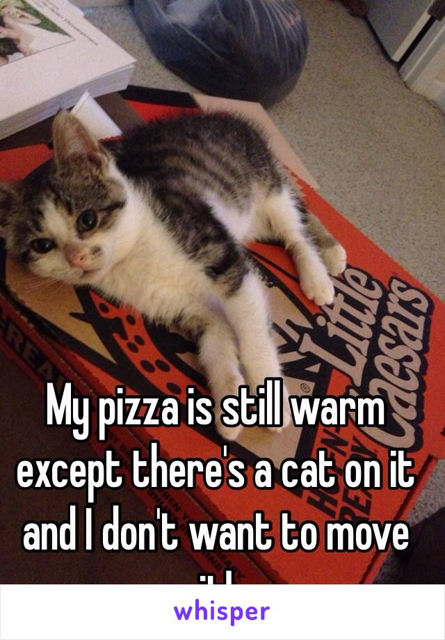 My pizza is still warm except there's a cat on it and I don't want to move it!