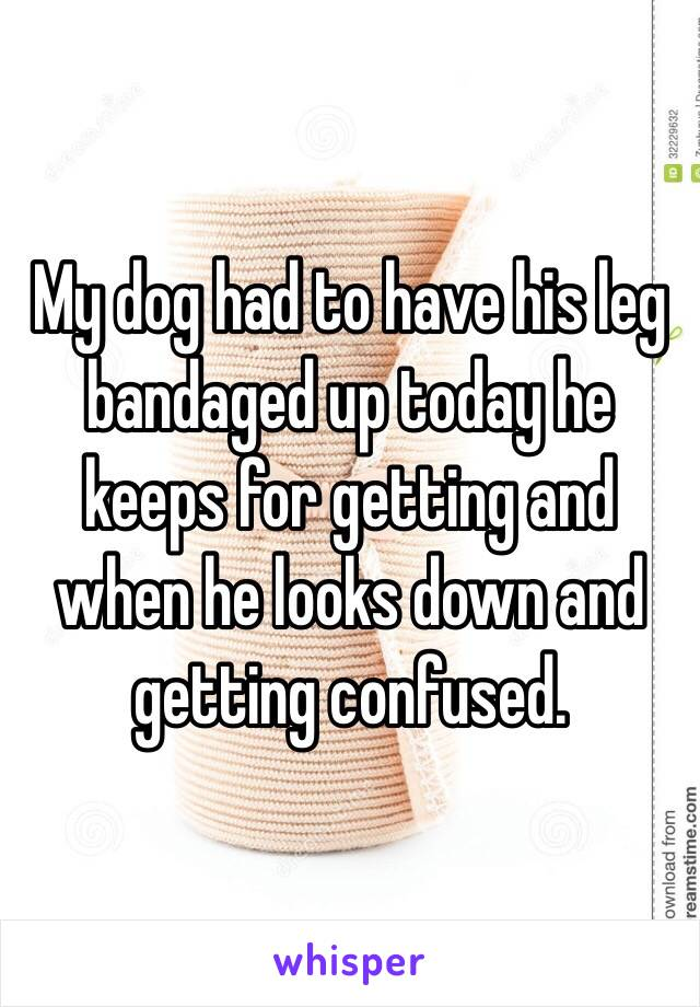My dog had to have his leg bandaged up today he keeps for getting and when he looks down and getting confused.
