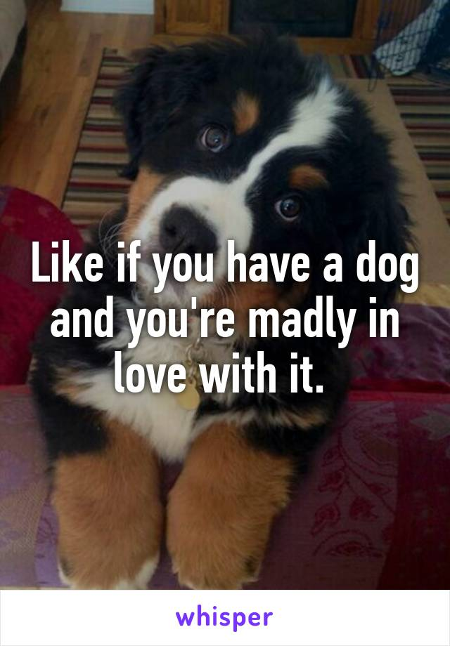 Like if you have a dog and you're madly in love with it.