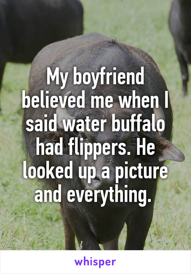 My boyfriend believed me when I said water buffalo had flippers. He looked up a picture and everything.