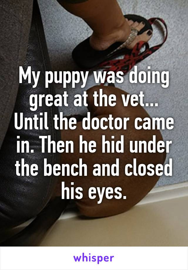 My puppy was doing great at the vet... Until the doctor came in. Then he hid under the bench and closed his eyes.