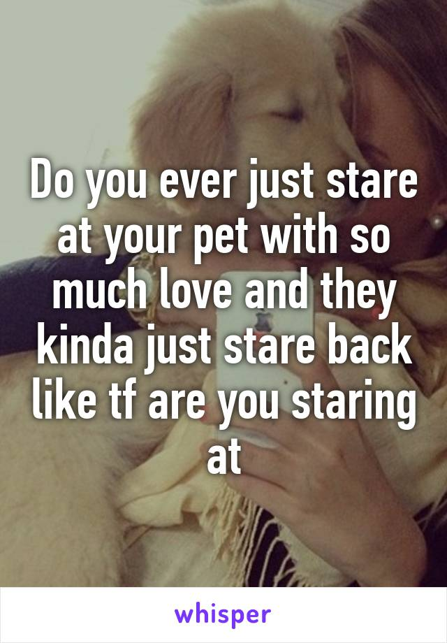 Do you ever just stare at your pet with so much love and they kinda just stare back like tf are you staring at