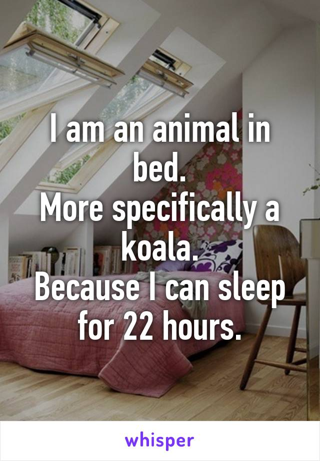 I am an animal in bed. More specifically a koala. Because I can sleep for 22 hours.