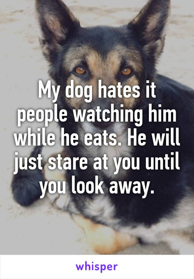 My dog hates it people watching him while he eats. He will just stare at you until you look away.