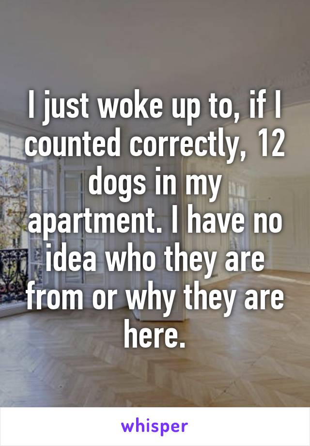 I just woke up to, if I counted correctly, 12 dogs in my apartment. I have no idea who they are from or why they are here.