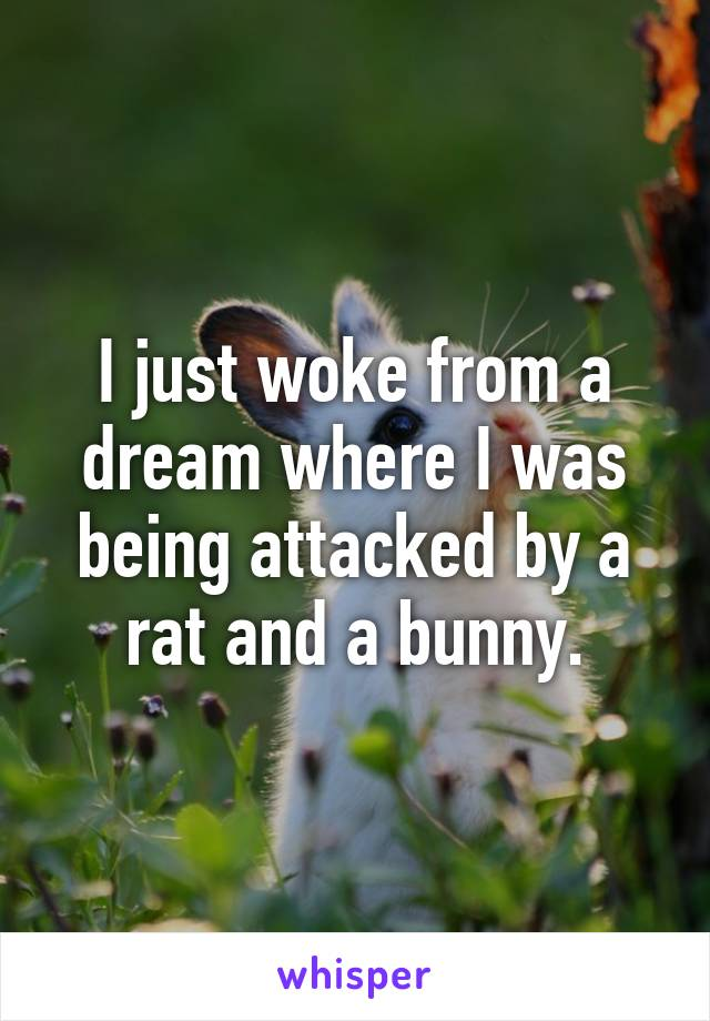 I just woke from a dream where I was being attacked by a rat and a bunny.