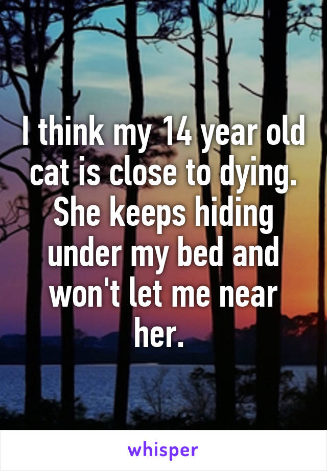 I think my 14 year old cat is close to dying. She keeps hiding under my bed and won't let me near her.