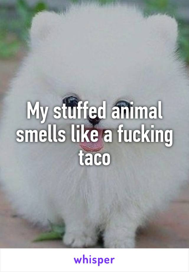 My stuffed animal smells like a fucking taco
