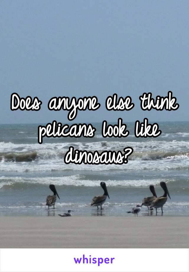 Does anyone else think pelicans look like dinosaus?