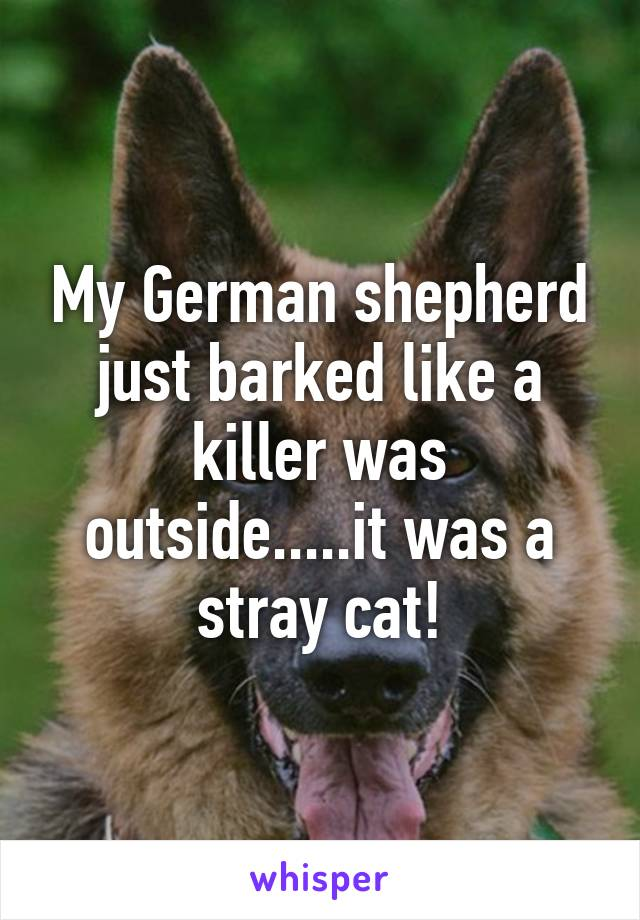 My German shepherd just barked like a killer was outside.....it was a stray cat!