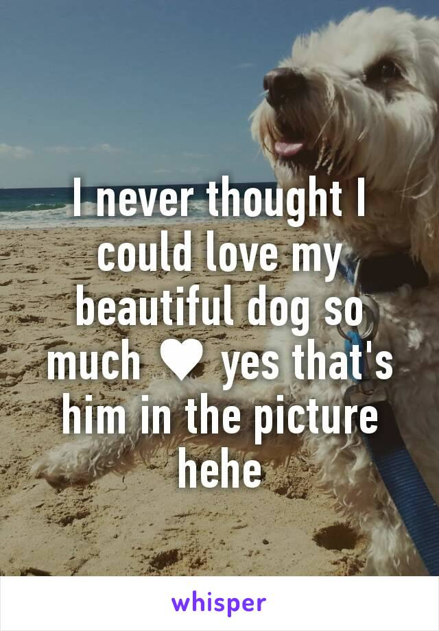 I never thought I could love my beautiful dog so much ♥ yes that's him in the picture hehe